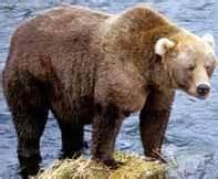 Khmer animal that is a bear is called klaa-kmum